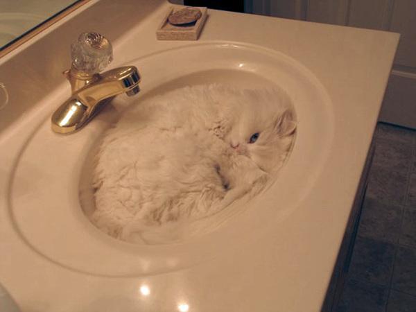 ninja-cat-hiding-funny-32__605
