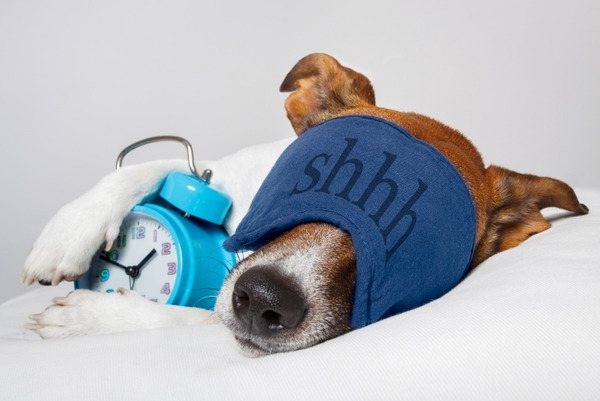 5485725-dog-sleeping-with-alarm-clock-and-sleeping-mask