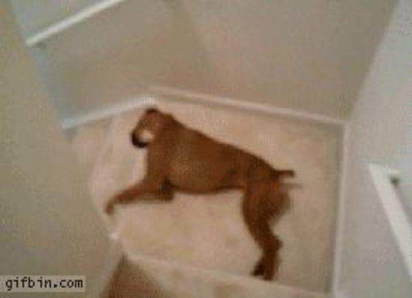 trappan_doggifpagecom