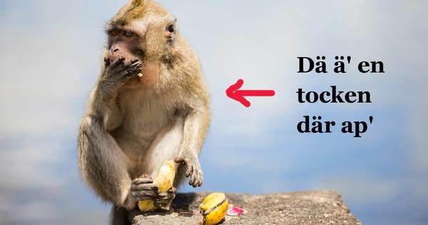 482374-wild-monkey_pil