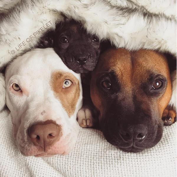 perritos1