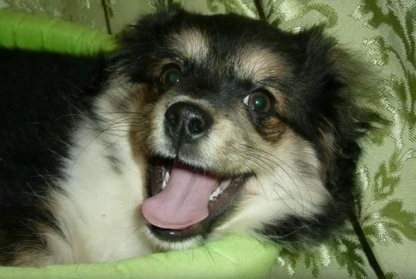 cachorro7
