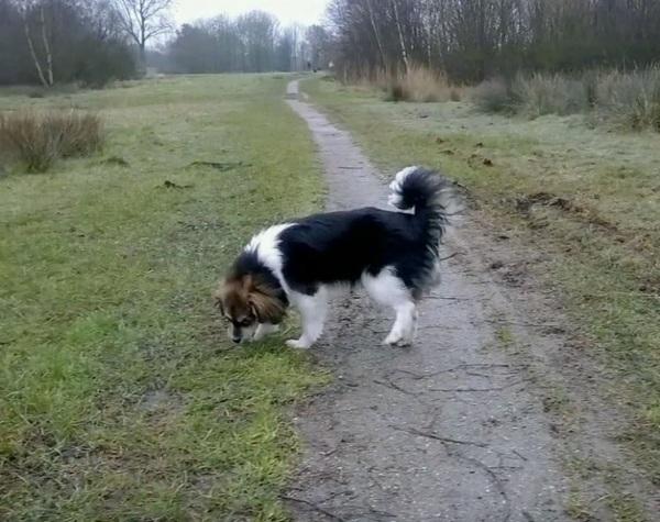 cachorro9