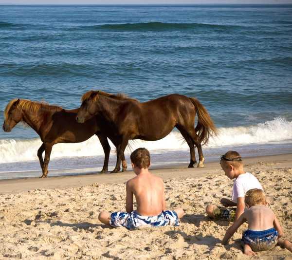 caballossalvajes4