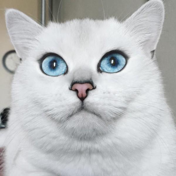 gatoblanco8