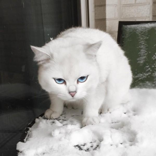 gatoblanco4