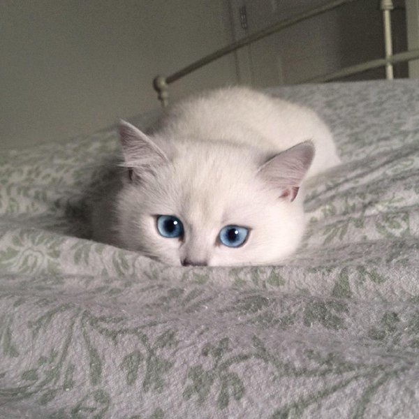 gatoblanco6