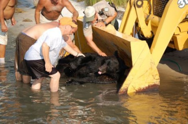 drowning-bear-rescue-14
