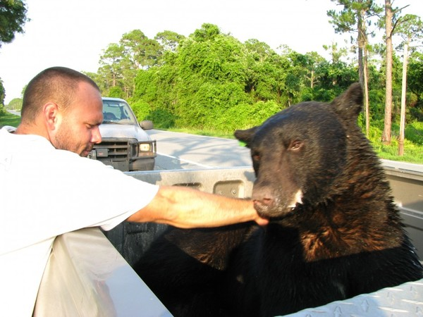 drowning-bear-rescue-15