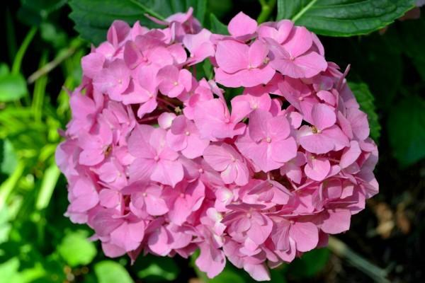 blommor1-600x400