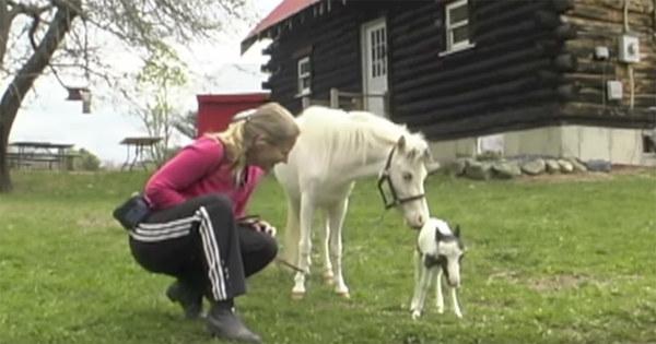 världens minsta häst