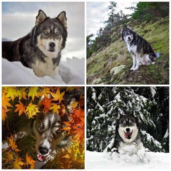 wolfe10
