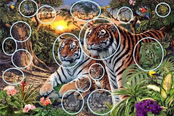 tigrar3-600x400