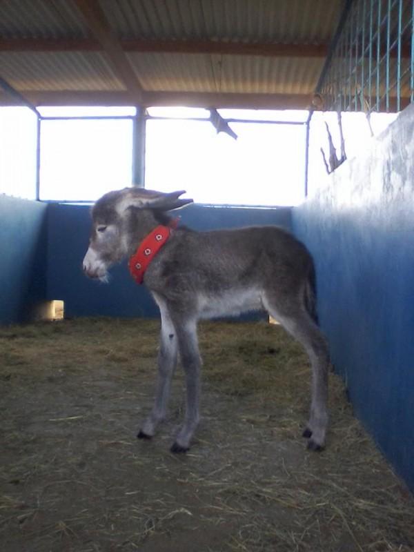 donkey-5-600x800
