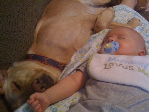 pups-and-babies-18-600x450