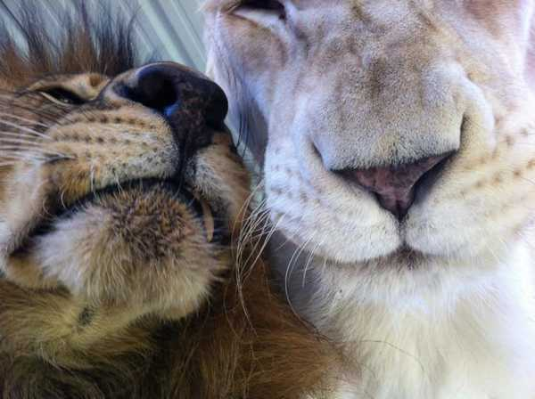 Lions 9
