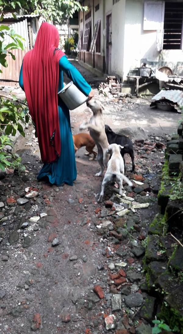 stray dogs 3