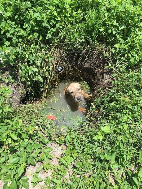 puddle 1
