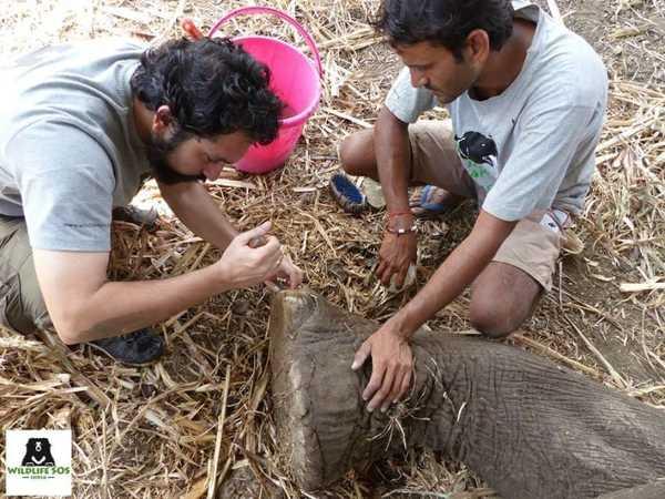 elefant9