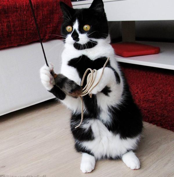 gatocorazon2