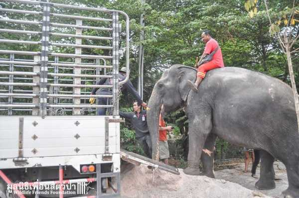 elefantas3