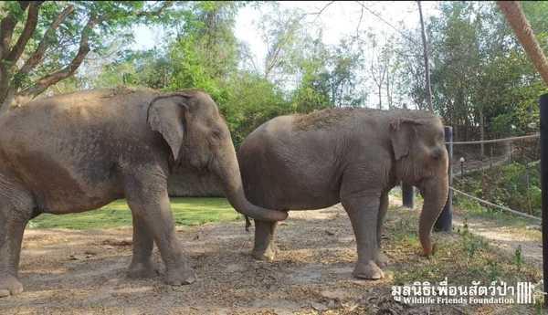 elefantas5