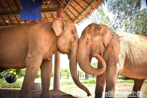 elefantas9
