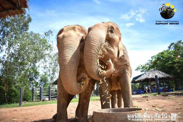 elefantas8