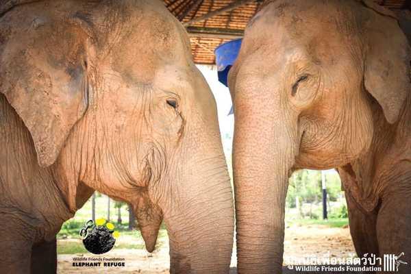 elefantas7