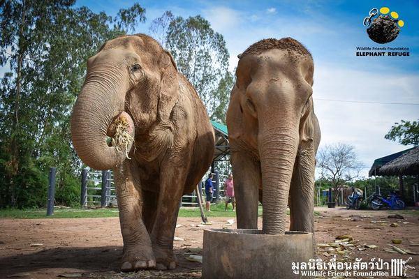 elefantas10