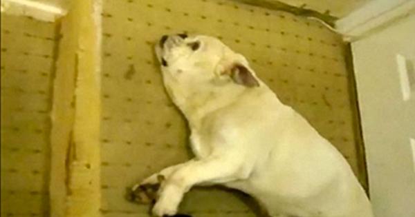 hundmisshandel1