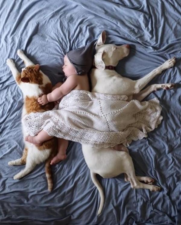Картинки по запросу rescue dog 11 month old best friend