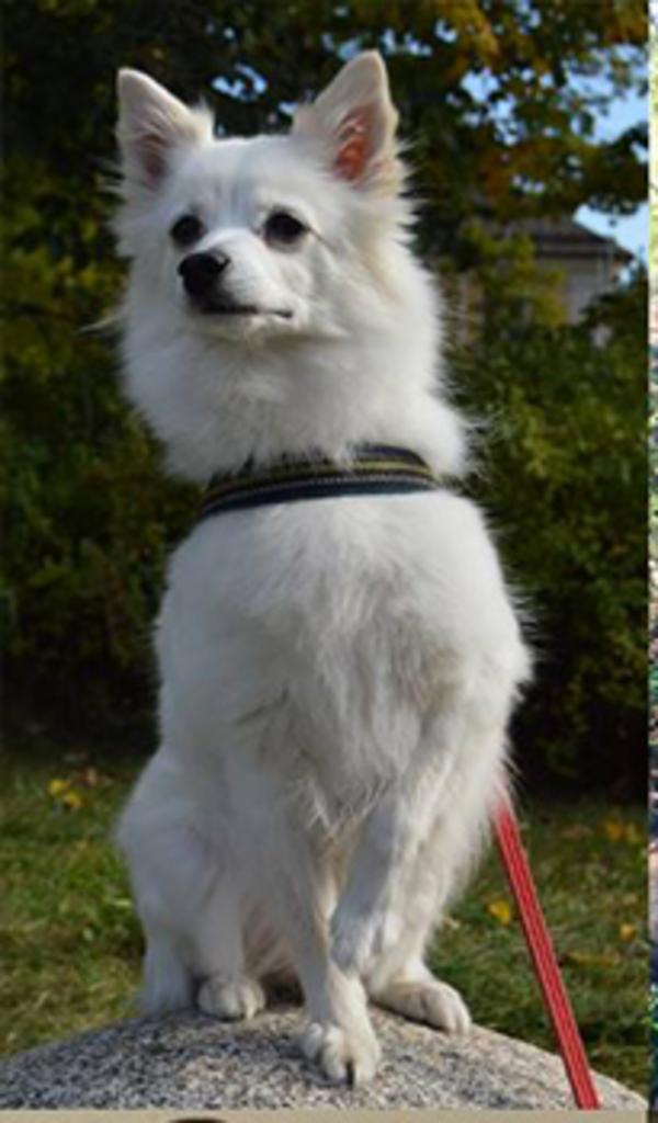 hundstallet1