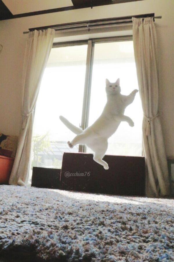 katt7