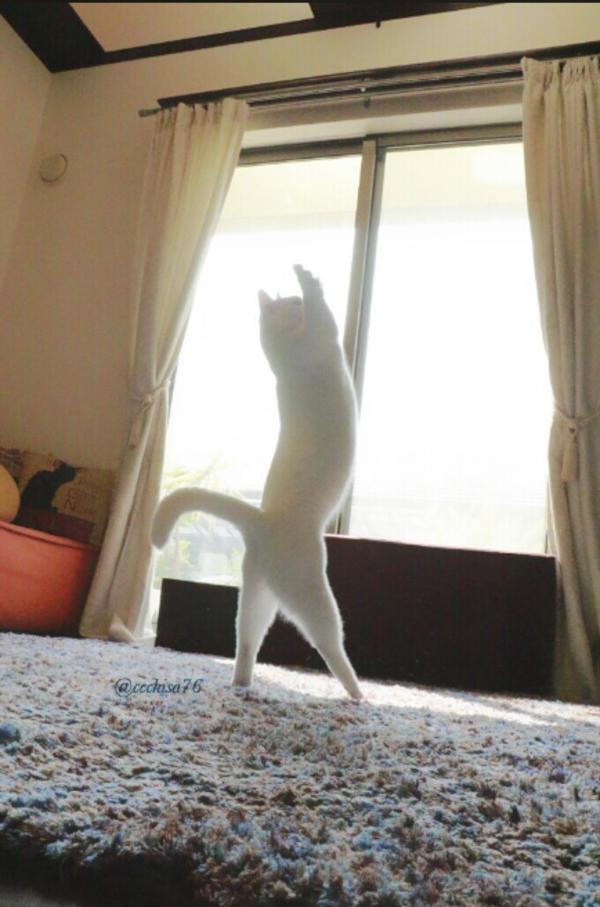 katt8