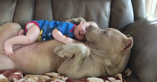 bebishund2