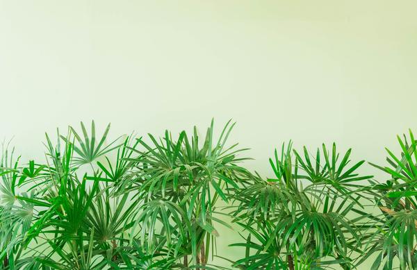 kasvi