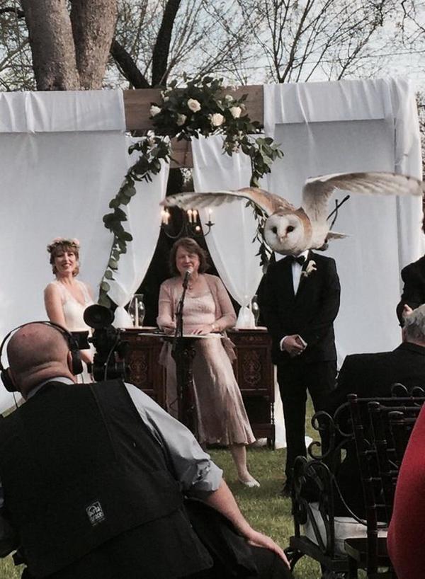 owl_wedding