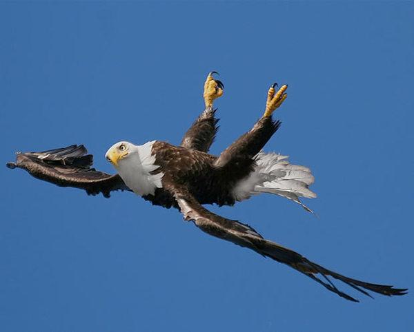 eagle111