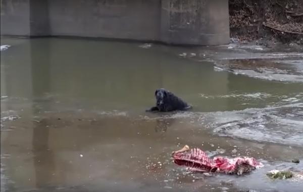 Sam i vattnet