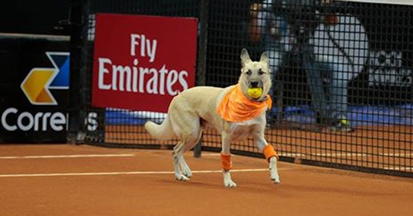 tennishunden