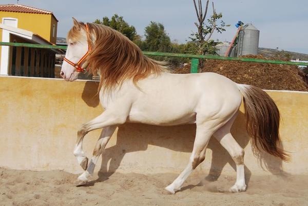 hest4