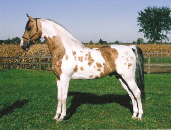 hest6