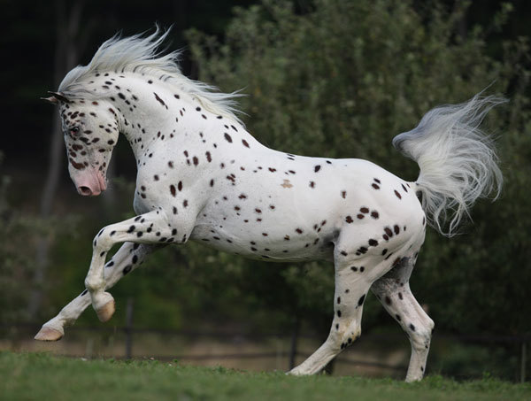 hest9