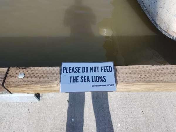 sea lion 5