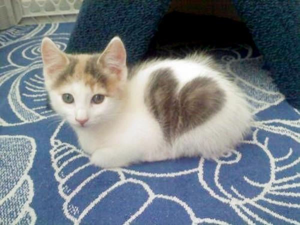 27d25aec0e4f 6 katter med en så vakker pels at man nesten ikke tror at det er sant