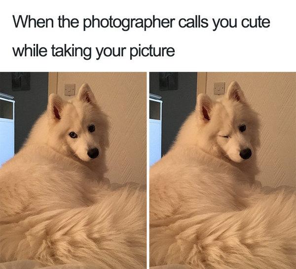 dog 24