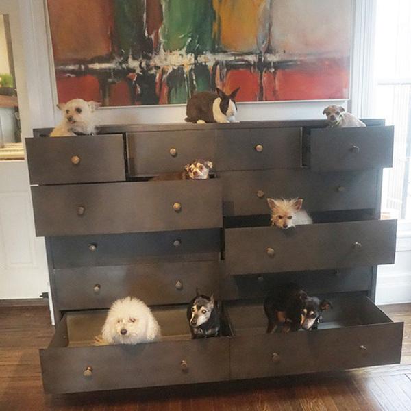 shelterdogs_1