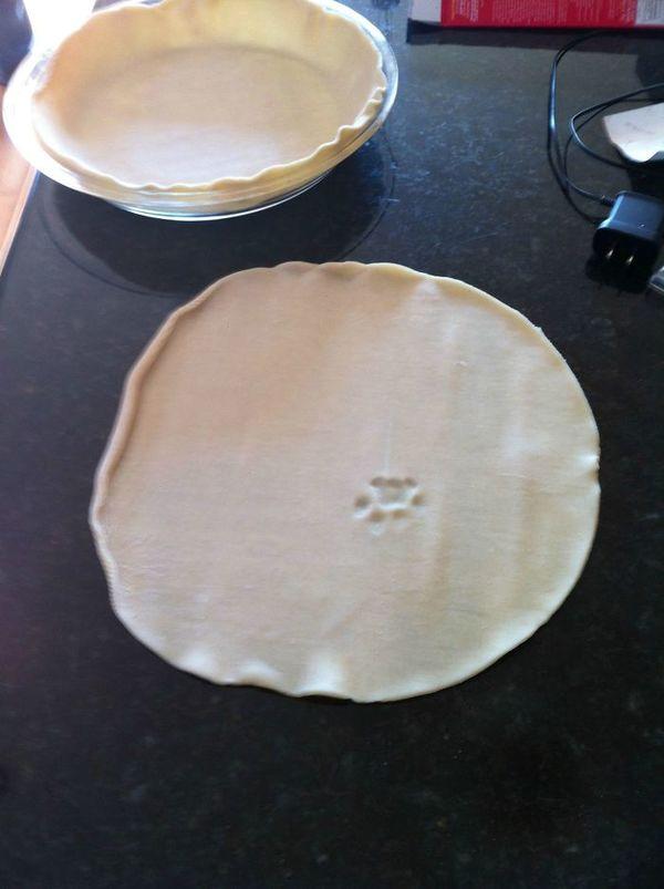 cat pie